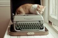 I ♡ my cat. ✿◕ ‿ ◕✿